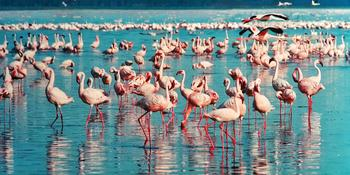 Blog index page thumb pink flamingo 1484781 1280