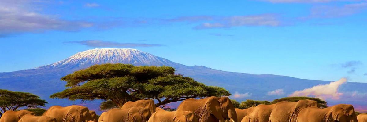 Show big tanzania kilimanjaro 1600px