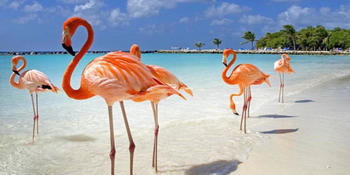Blog index page thumb aruba flamingo