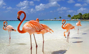 Destination index aruba flamingo