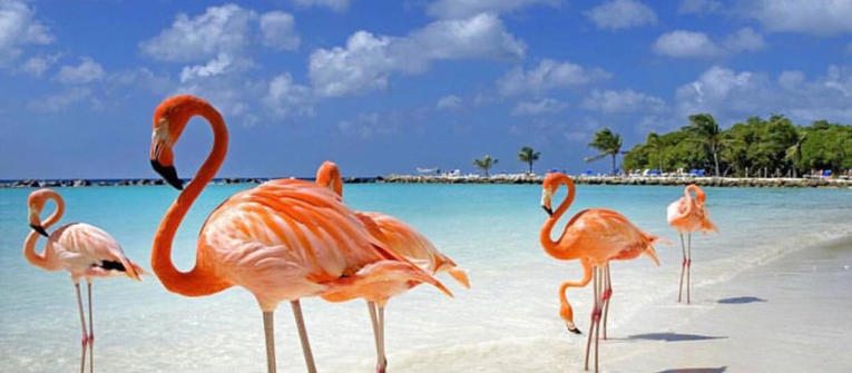 Index big wide aruba flamingo