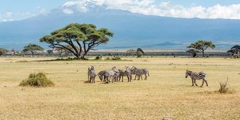 Blog index page thumb kilimanjaro 2