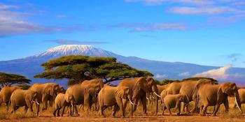 Blog index page thumb tanzania kilimanjaro 1600px