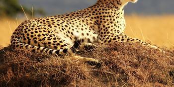 Blog index page thumb afrika safari