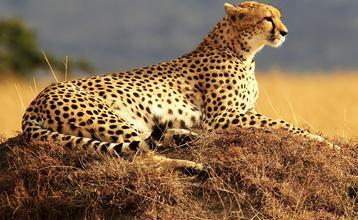 Destination index afrika safari