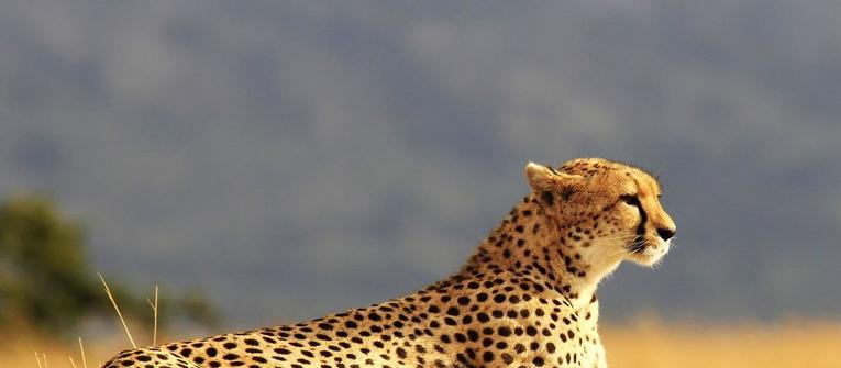 Index big wide afrika safari