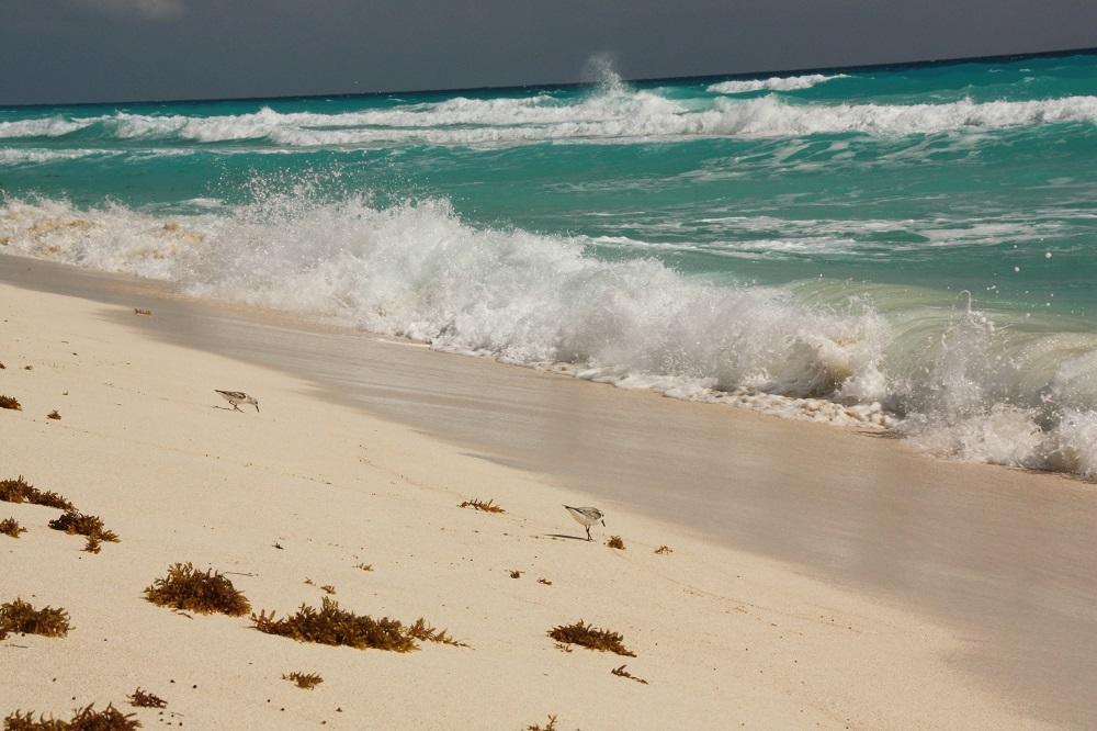 Cancún - Playa Delfines