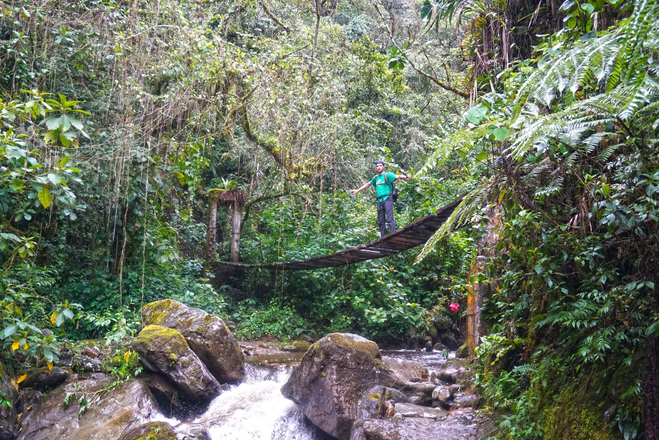 Dažďový prales v údoli Cocora