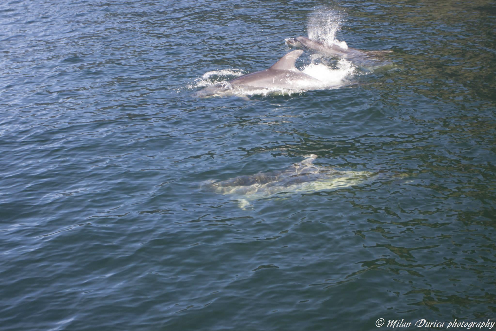 Delfíni v Milford Sound