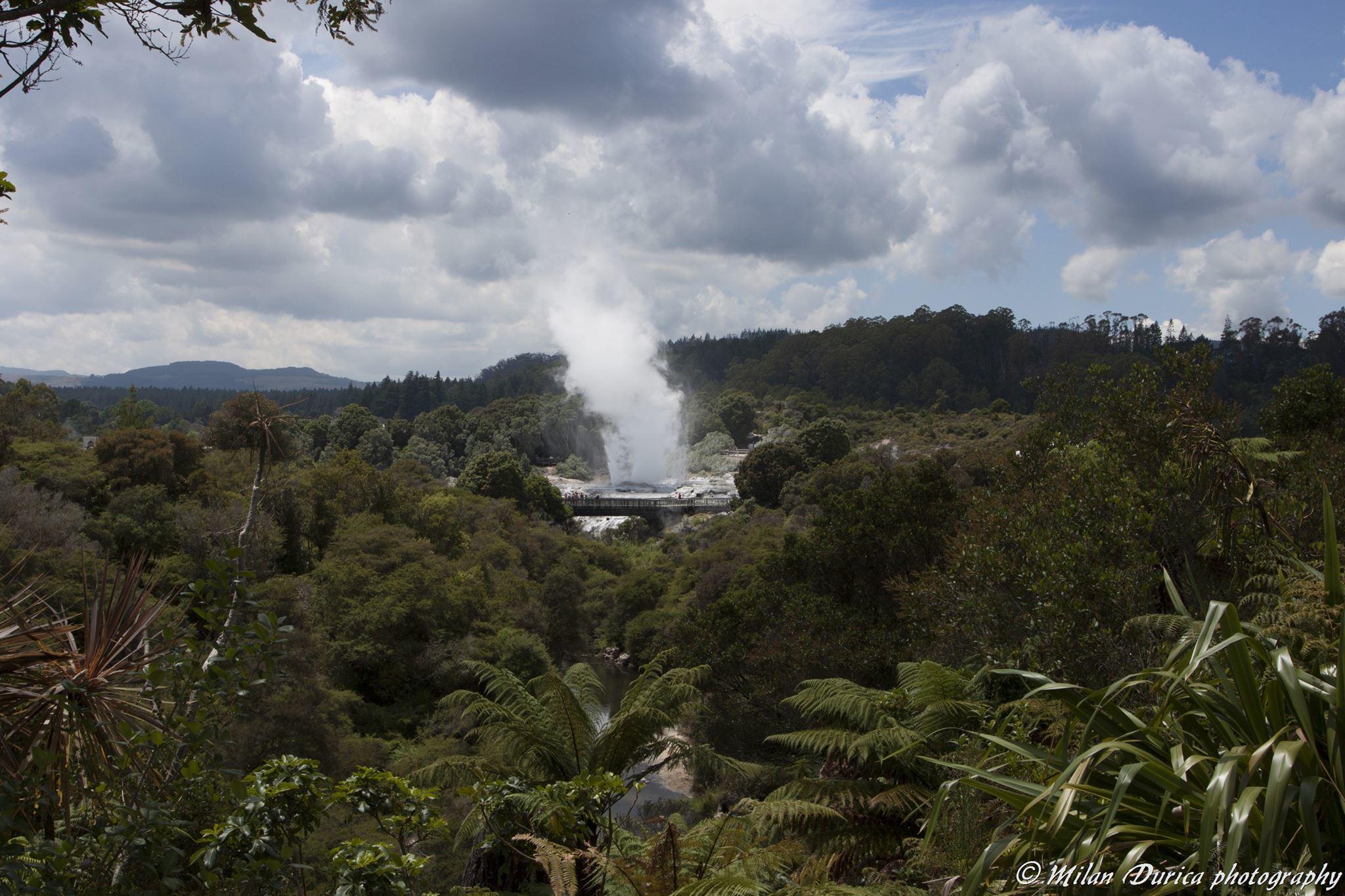 Gejzír v Whakarewarewa