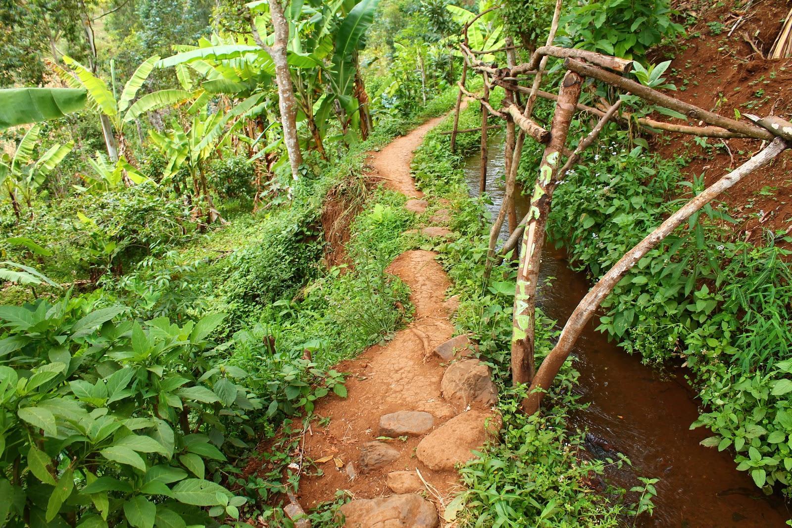 Materuni - Takáto lesná cesta nás sprevádzala celý čas