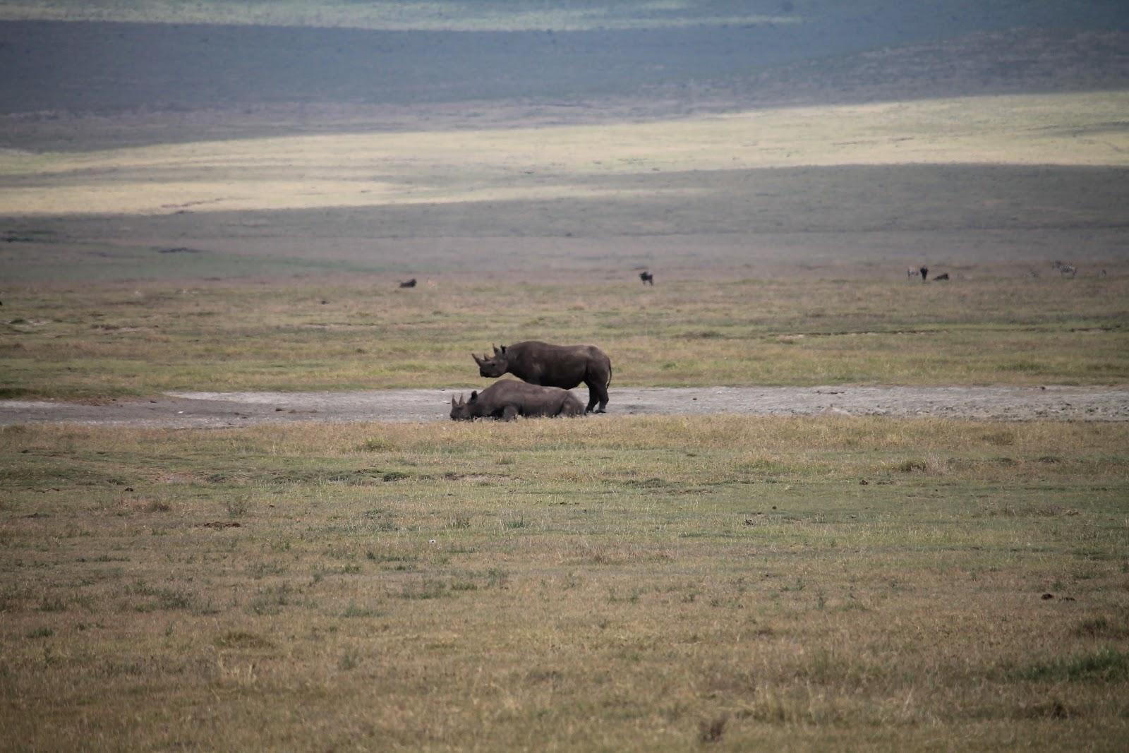 Pár nosorožcov osviežujúcich sa vo vode, Ngorongoro