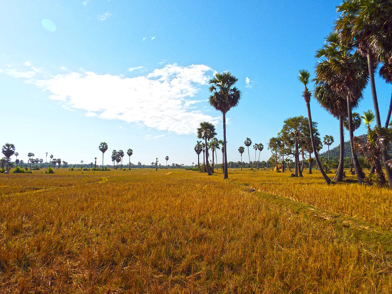 Typická kambodžská krajina.