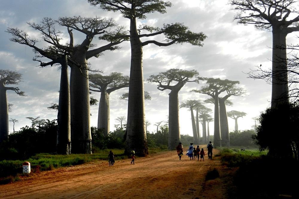 Vladimír DUDLÁK - Esencia Madagaskaru