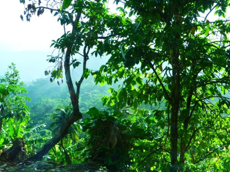 Typická panenská príroda a bujná vegetácia.